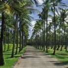La palmeraie de l'île Moustique, qui déploie ses arbres majestueux.