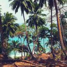 Les palmiers de l'île de Ross, ancienne colonie britannique.