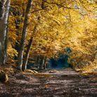 Dans le Parc naturel des Ardennes