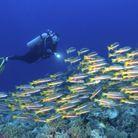 Palaos, en Micronésie