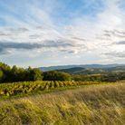 Sur la route des vieilles pierres et des vignes : les Pierres dorées dans le Beaujolais