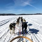 Un tour de traîneau à chiens à la Pourvoirue Cecaurel (région des Laurentides)