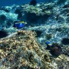 Observer les poissons dans les eaux transparentes et les oiseaux dans une réserve naturelle