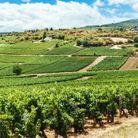Un road trip sur la route des vins
