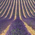 Le plateau de Valensole (Alpes-de-Haute-Provence)