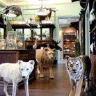 Rester fasciné par le musée Deyrolle