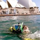 Requin triathlon Sydney