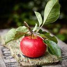 Combien de calories dans une pomme ?