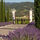 La longue allée de cyprès et de lavande qui mène au SPA & Wellness Center Coquillade