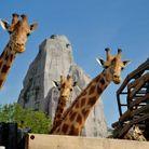 Parrainer animaux du parc zoologique de Paris