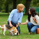 Avec le beagle