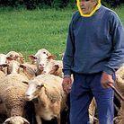 Raymond Domenech : Eleveurs de moutons dans le Larzac