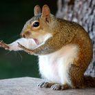 Un écureuil facétieux