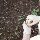 Manipuler des engrais ou des insecticides
