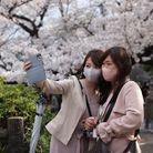 La saison dehanamiest un moment très attendu au Japon.
