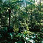 Faire une randonnée dans une forêt tropicale